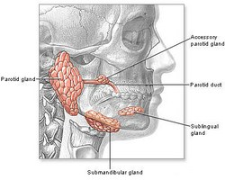 Salivary Gland Infections